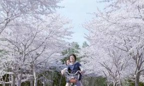 【京都】花多人少,京都的几处赏樱秘境。嘘,自己知道就行了!