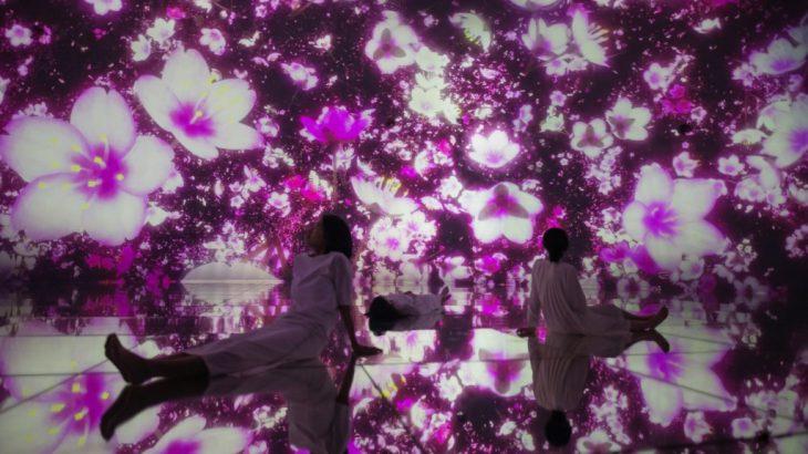 丰洲「teamLab Planets Tokyo」带你走进如梦似幻樱花水世界
