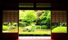 【京都】35岁的她放弃一切,跨海挑战一个保守排外、男性主导的园艺修剪行业!